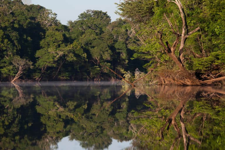 Regenwoud Frans Guyana