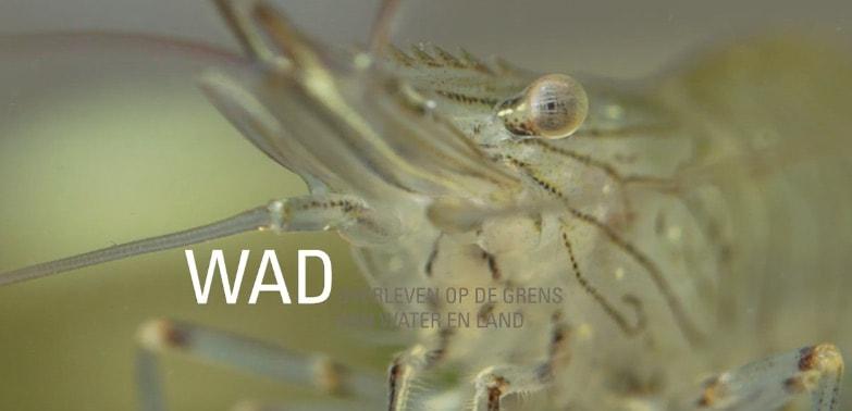 teaser film wad